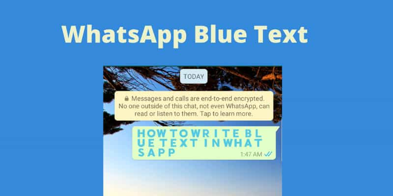 WhatsApp_Blue_Text